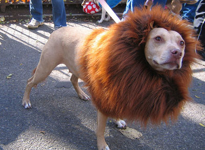 14-amazing-ridiculous-dog-costumes-14